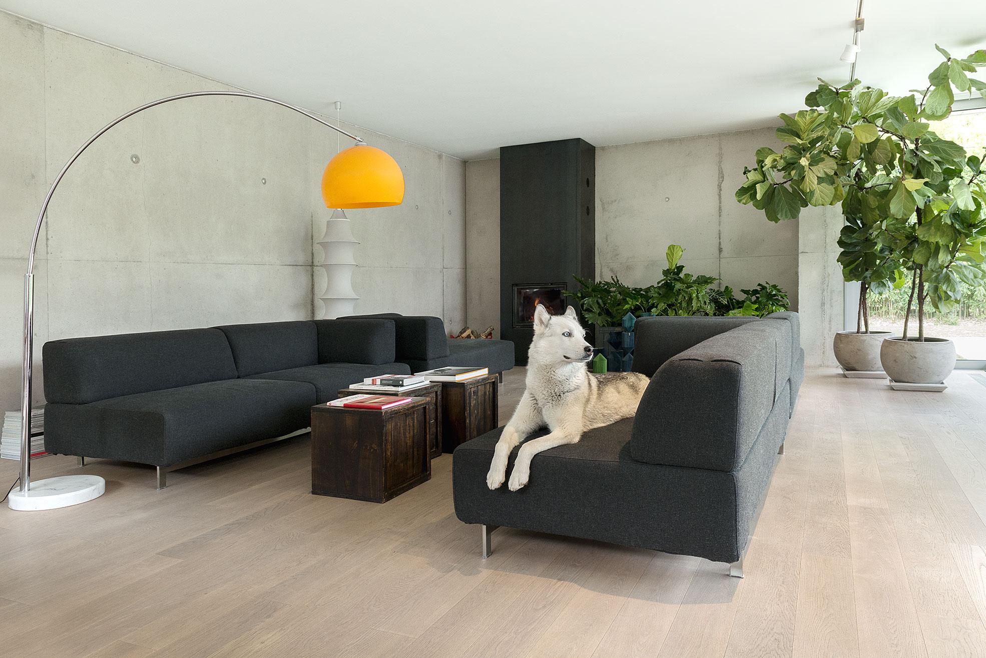 Living room with a white dog on the sofa in the concrete and minimalist villa of Rosalba Piccinni Photographer Maria Teresa Furnari
